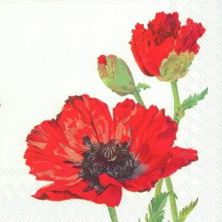 Red Poppy white