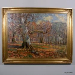 Lysning i skov